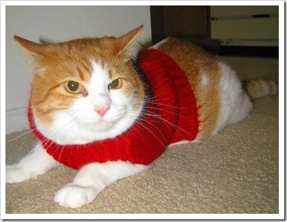 catsweater